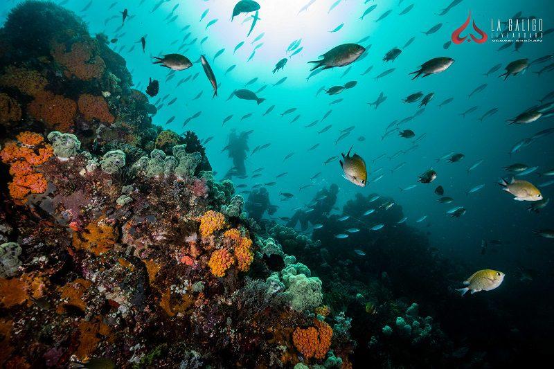 Top 5 Raja Ampat Dive Sites – Part 2
